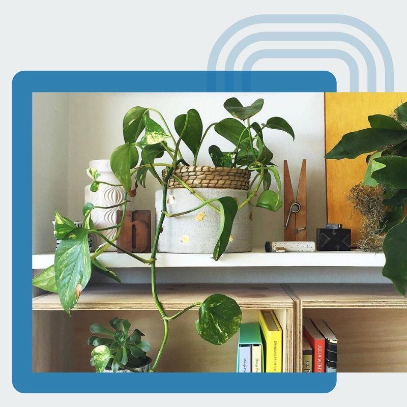 Plants Ceramics Bookshelf